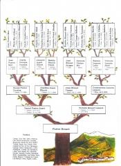 Árbol genealógico Fuster